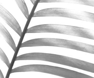 etsy, tropical print, and tropical wall art image