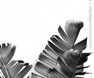 leaves, aesthetic, and plants image