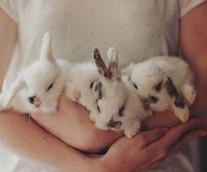 animal, baby, and bunny image