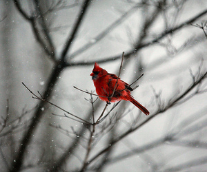 winter, bird, and photography image