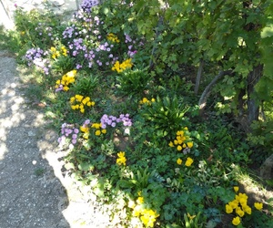 flowers, mygarden, and beauty image
