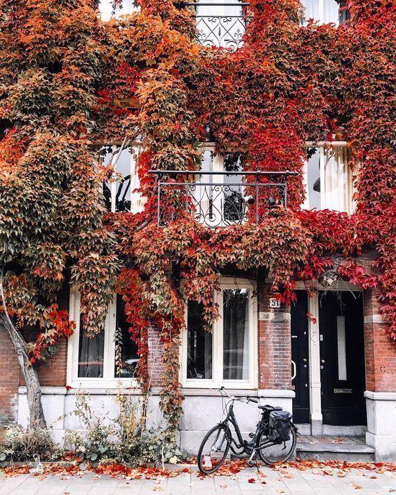 autumn, fall, and beautiful image