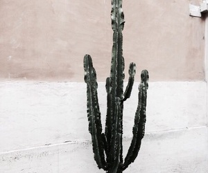 cactus and theme image