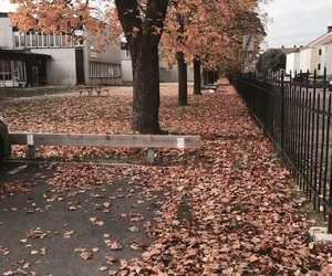 autumn, filter, and leaves image