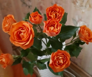 nice, orange, and love image
