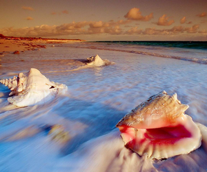 beach, sea, and shell image