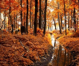 fall, orange, and trees image