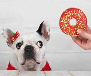 dog, good dog, and sweet image