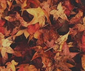 gif, autumn, and leaves image
