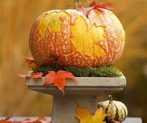 pumpkin, autumn, and leaves image