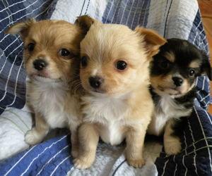 animals, beautiful, and dog image