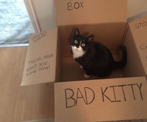 box, cat, and monster image