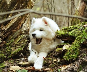 hd puppy wallpaper and free dog wallpapers image