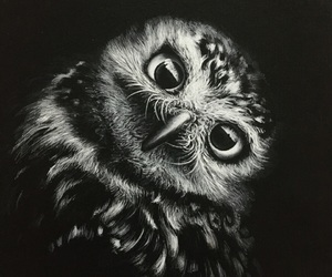 acrylic, blackandwhite, and animals image