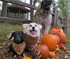 animals, october, and dogs image