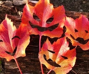 leaves, autumn, and Halloween image