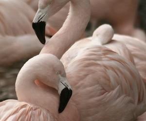 animal, bird, and pink image