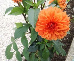 big, leaves, and orange image