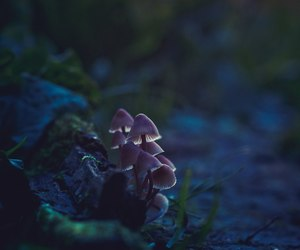 magic, mushrooms, and woods image