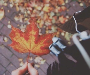 aesthetic, autumn, and whitherevolution image