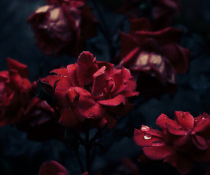 aesthetic, Darkness, and flowers image