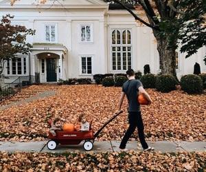 autumn, pumpkins, and harvest image