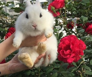 rabbit, animal, and flowers image