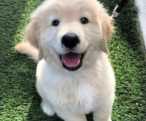 adorable, cutie, and dog image