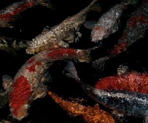 aesthetic, fish, and dark image