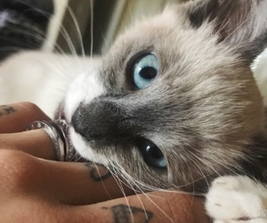 kitten, paws, and pet image