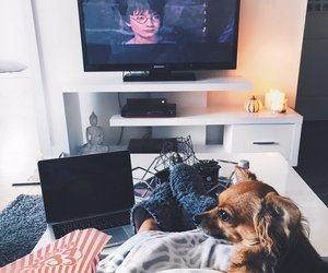 harry potter, autumn, and dog image