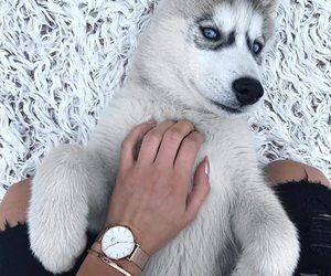 dog, love, and beautiful image