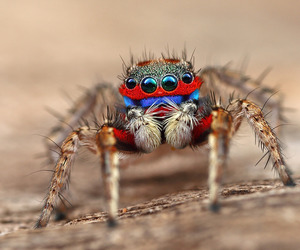 entomology, macro photography, and nature photography image
