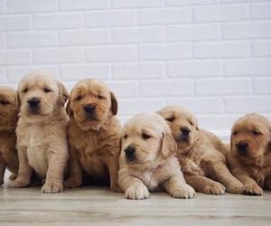 animal, adorable, and dogs image