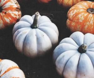aesthetic, pumpkin, and acacia brinley image