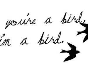 bird and the notebook image