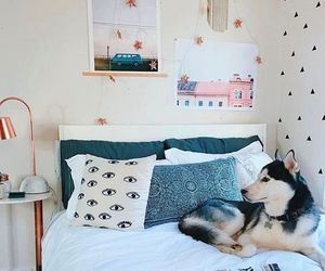 room, dog, and bed image