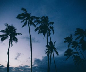 beach, photography, and places image