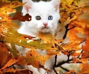 cat, autumn, and kitty image