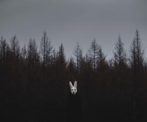 dark, grunge, and rabbit image
