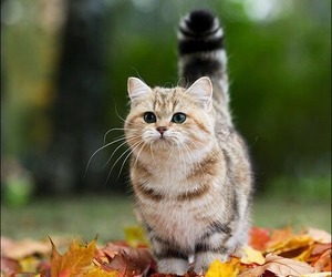 cat, autumn, and animal image