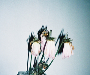 dead, flowers, and Dead Flowers image
