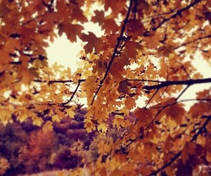 autumn, inspiration, and fall image