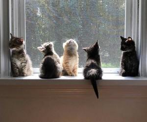 cat, pet, and kitten image
