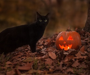 black cat, fall, and october image