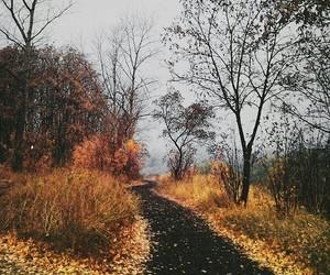 fall, autumn, and tree image