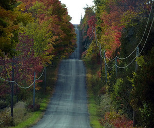 autumn, country living, and road image