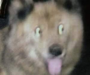dog, meme, and memes image