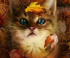 cat, autumn, and kitten image