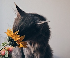 animal, cat, and flower image